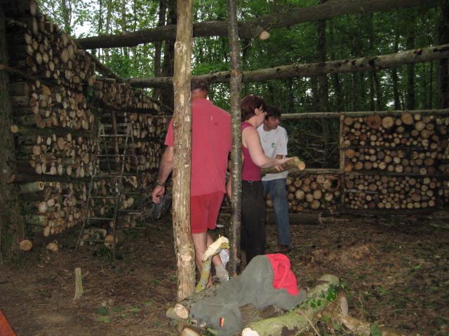 Cabane en bois survie